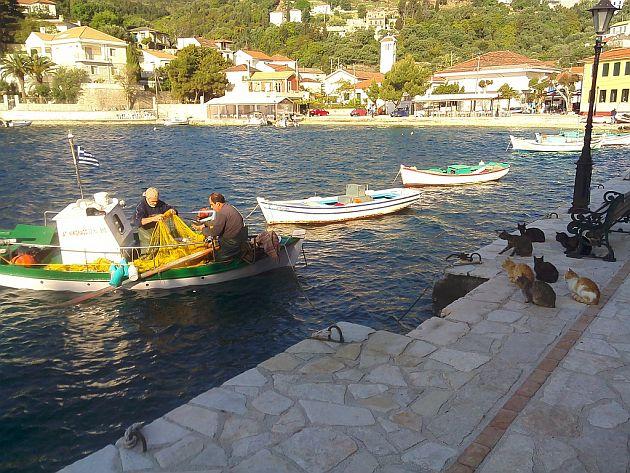 Rybacy i koty w Kioni