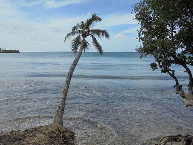 Palma na plaży Salines